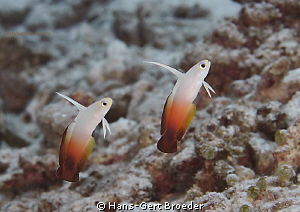 Dartfish